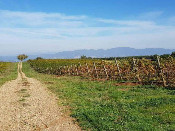Terreno agricolo in vendita, contrada 10 km sopra Orvieto, Orvieto(TR)
